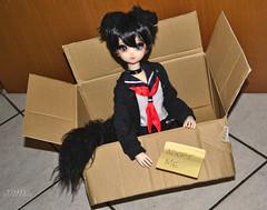 Neeko (Vladdy ~) Tags: obitsu mafuyu obitsuboy obitsu45 dollboy cat pet neko