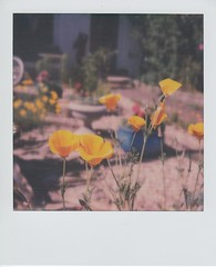 June Colour (ifleming) Tags: expiredfilm sx70colourfilm impossibleproject sidmouth polaroid