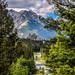 Banff Springs Through the Trees