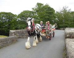 Traffic Congestion Lostwithiel Style. Panasonic Lumix DMC TZ70. P1040866. (Robert.Pittman) Tags: panasonc lumix tz70 horse horsedrawncart 14thcenturybridge foweyriver lostwithielbridge theglobeinn northstreet lostwithiel cornwall thewestcountry thesouthwest gb uk