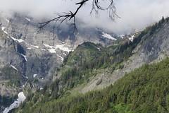 Mex (bulbocode909) Tags: valais suisse mex montagnes nature printemps paysages forêts arbres branches neige brume nuages vert