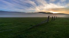 Туманы июня #своифото, #пейзаж, #природа, #утро, #рассвет, #дерево, #натура, #восход, #sunrise, #nature, #tree, #Landscape, #sun, #туман, #лучи, #foggy, (ЛеонидМаксименко) Tags: пейзаж восход утро лучи foggy tree nature landscape природа натура дерево sun рассвет своифото туман sunrise