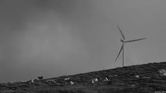 El toro (KOSTAS PILOT) Tags: eltoro bull windpark panahaikomountain panahaiko mountain clouds storm hiking greece achaia peloponese monochrome blackandwhite sony sonyhx60 kostaspilot landscape mystic photography ελλάδα πελοπόννησοσ αχαιασ παναχαϊκό βουνό σύννεφα αιολικόπάρκο μονοχρωμο ασπρόμαυρη outdoor τοπίο φύση nature nube rain minimal