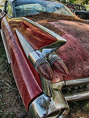 2126 (Betty Cowart) Tags: oldcarcity white georgia junkyard abandoned forgotten neglected car rusty patina nature woods forest vintage classic antique country taillight tailfin chrome bumper pineneedle 1959 cadillac red