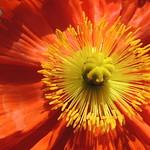 Flores en su entierro ♫♪ thumbnail