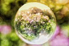 Bokeh, Monkey Forest, Tittensor, UK (mattwareherts) Tags: green sun summer reflection quartz rhododendrons ball bokeh crystal