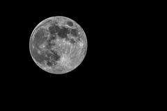 Full Moon (Brieuc.Baillot) Tags: full moon fullmoon pleinelune lune night astrophotography astro nightsky nikon d600 sigma 400mm stack registax