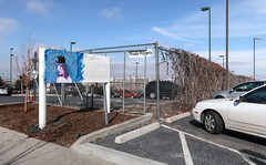 Painting of a very sexy Colorado Rockies person on half a sign in mulch at a viney chainlink fence between two parking lots. (Tim Kiser) Tags: 2018 20180209 cityandcountyofdenver colorado coloradofrontrange coloradorockies coloradorockiesbaseballcap coloradorockiesmarketing denver denvercolorado february february2018 fivepoints fivepointsneighborhood frontrange img6882 parkavenue parkavenuewest baseballcap bedofmulch blueandpurple blueandpurplepainting centralcolorado chainlink chainlinkfence climbingplants fence fencebetweenparkinglots figurepainting lampposts lightpoles marketing mulch mulchbed painting parkedcars parking parkingcurbs parkinglot parkinglots partlycloudy privateproperty privatepropertysign purpleperson sexyperson sign twoparkinglots verysexyperson vines vinesonachainlinkfence vinesonafence