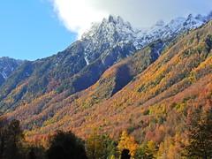 Cerro Peinetas (Mono Andes) Tags: andes chile chilecentral regióndelaaraucanía parquenacional parquenacionalvillarrica cerropeineta otoño bosque forest autumn