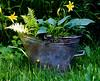 Repurposed Junk - Coal Scuttle (ashhayling) Tags: coal scuttle junk old broken rusty hosta fern plant pot garden