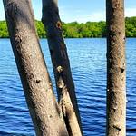 Franklin Lakes Nature Preserve thumbnail