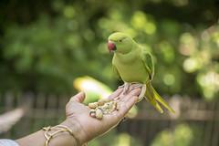 DSC_2184 (photographer695) Tags: wintrade rest recreation hyde park london feeding parakeet birds with nicole ross
