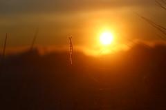 Sun Shine. (Jansha Crazy) Tags: