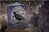 La leyenda del pájaro negro (seguicollar) Tags: imagencreativa photomanipulación art arte artecreativo artedigital virginiaseguí libro pájaro negro edificio casa fachada leyenda morado rocas agua lluvia rain