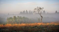 Mornings up the brae's (chrismarr82) Tags: nikon d750 scotland sigma morning sunrise tree