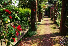 Silenzio (QuidoX) Tags: park rosen roses green dream romantik bank outdoor nrw dus germany southpark summer flowers