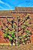 Leeds Castle UK (John Panneman Photography) Tags: leeds castle uk kent panneman tree fruit nikon d50