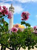 Peace in Prayer (KhanTM) Tags: masjid sky sun summer london flower ramadhan muslims islam mosque