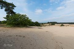 Kootwijkerzand (Leo Kramp) Tags: 2018 landscape landschap accessoires loweproflipside300awii kootwijk natuurfotografie zandduinen sanddunes kootwijkerzand gelderland nederland nl flickr