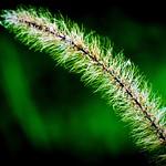 Nature's details thumbnail