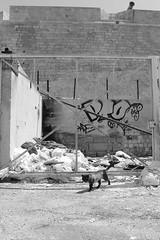 Urbex cat (ZUHMHA) Tags: marseille france urban urbain port harbour courbes curve geometrry texture matière line lignes totalphoto géométrie letter lettre mot word sign texte text écriture cat chat animal fence grille grillage barrière urbex