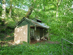 Hut in the woods (BurnThePlans) Tags: woods forest trees beech hut shed ruin derelict abandoned