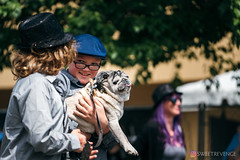 PugCrwal-145 (sweetrevenge12) Tags: portland oregon unitedstates us pug parade crawl brewing sony pugs dog pet