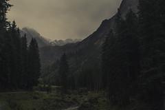 Valley of Wildenbach (Netsrak) Tags: kleinwalsertal berg berge alpen baum wald nebel fog mist schnee snow natur
