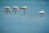 Descanso (fredi_simo) Tags: flamencos pajaros bird