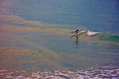 Salvemos los Océanos (Aprehendiz-Ana Lía) Tags: flickr nikon mar water agua océano argentina salvemoslosocéanos imagen mdq hombre deporte azul blue mare analialarroudé olas ola digital sea landscape onda surf surfing surfer