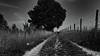 Triple path (frankdorgathen) Tags: landschaft landscape himmel sky monochrome blackandwhite schwarzweiss schwarzweis alpha6000 sony1018mm weitwinkel wideangle baum trees natur nature mettmann neandertal weg path