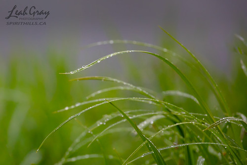 """Sedge Grass • <a style=""""font-size:0.8em;"""" href=""""http://www.flickr.com/photos/106269596@N05/40975801780/"""" target=""""_blank"""">View on Flickr</a>"""