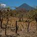 Am Fusse des Vulkans Maderas, Santa Cruz, Ometepe - Nicaragua