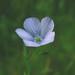 Unidentified Wildflower IMGP5606 (ambrknr) Tags: