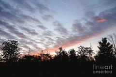 Hot pink streak (Aliceheartphoto) Tags: fineartamericaartist photography camera fineartamerica faa photographer pixelsartist pixels clouds cincinnatiphotography ohio sky trees landscape nature purple hotpink neonpink sunrise