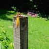 Bask on a Post (velodenz) Tags: fujifilm x100f insect garden naturaleza nature natur 1000 views 1000views fujifilmx100f velodenz