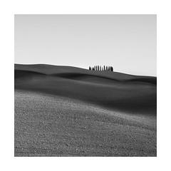 Crown (Nick green2012) Tags: tuscany illume square landscape blackandwhite silence undulations trees