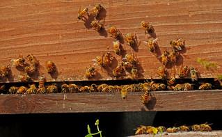 Bees at work..