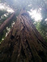 IMG_0644(1) (arkadiuszk) Tags: losgatos california unitedstates us