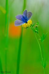 Belles couleurs (jpto_55) Tags: papillon proxi bokeh xe1 fuji fujifilm fujixf55200mmf3548rlmois hautegaronne france