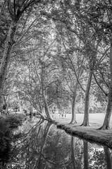 Randonnée autour d'Uzès (Patrice Fauré) Tags: minoltadynaxaf28mmf28 uzès bw gard arbres rivière nb sonya57 sony languedocroussillon languedoc