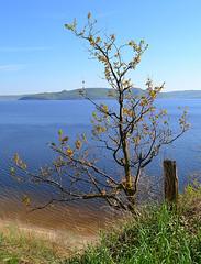 Coppice oak on the edge (МирославСтаменов) Tags: russia togliatti volga slope edge oak coppice tree crown azure branch sky