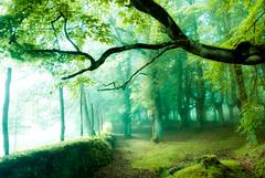 argia-1 (juan luis olaeta) Tags: basoa forest hayedo bosque pagoa paisajes landscape argia luz laiñoa niebla fog canon photoshop basquecountry euskalherria urkiola