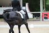 _MG_8037 (dreiwn) Tags: dressage dressur dressuur pferd reitturnier turnierreiten pferdesport horse horseback horseriding equestrian reitverein dressurprüfung kandare doublebridle reiten pferde reitplatz ridingarena