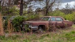 Last In Line (Wayne Stadler Photography) Tags: abandoned preserved junkyard georgia classic automotive derelict overgrown vehiclesrust rusty retro vintage oldcarcity rustographer rustography white cadillac 1970