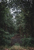 An opening (FrostSven) Tags: nature opening green brown earth earthy forest tree path dark sad melancholy scary hope