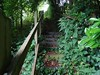 Stairway, in Devon (Phil Gayton) Tags: tree nettle leaf bramble steps railing banister stair stairway rowsellslane a385 totnes devon uk