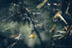 The Lord of Disarray (Mikko Manner) Tags: nikond7200 nikon3570f28af nikkor vintageglass vintagelens legacyglass legacylens photography depthoffield spider web silk clutter mess moody finland nuuksionationalpark layers