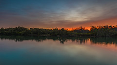 Nature's Reflections at Sunrise (Merrillie) Tags: daybreak woywoy landscape nature australia foreshore newsouthwales earlymorning nsw brisbanewater green orange trees morning dawn coastal water sky waterscape sunrise centralcoast bay outdoors