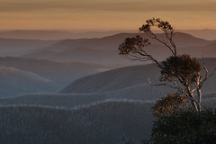 DSC_0563 (72photography) Tags: australia snowgum tree mountain ridge sunset twilight alpine